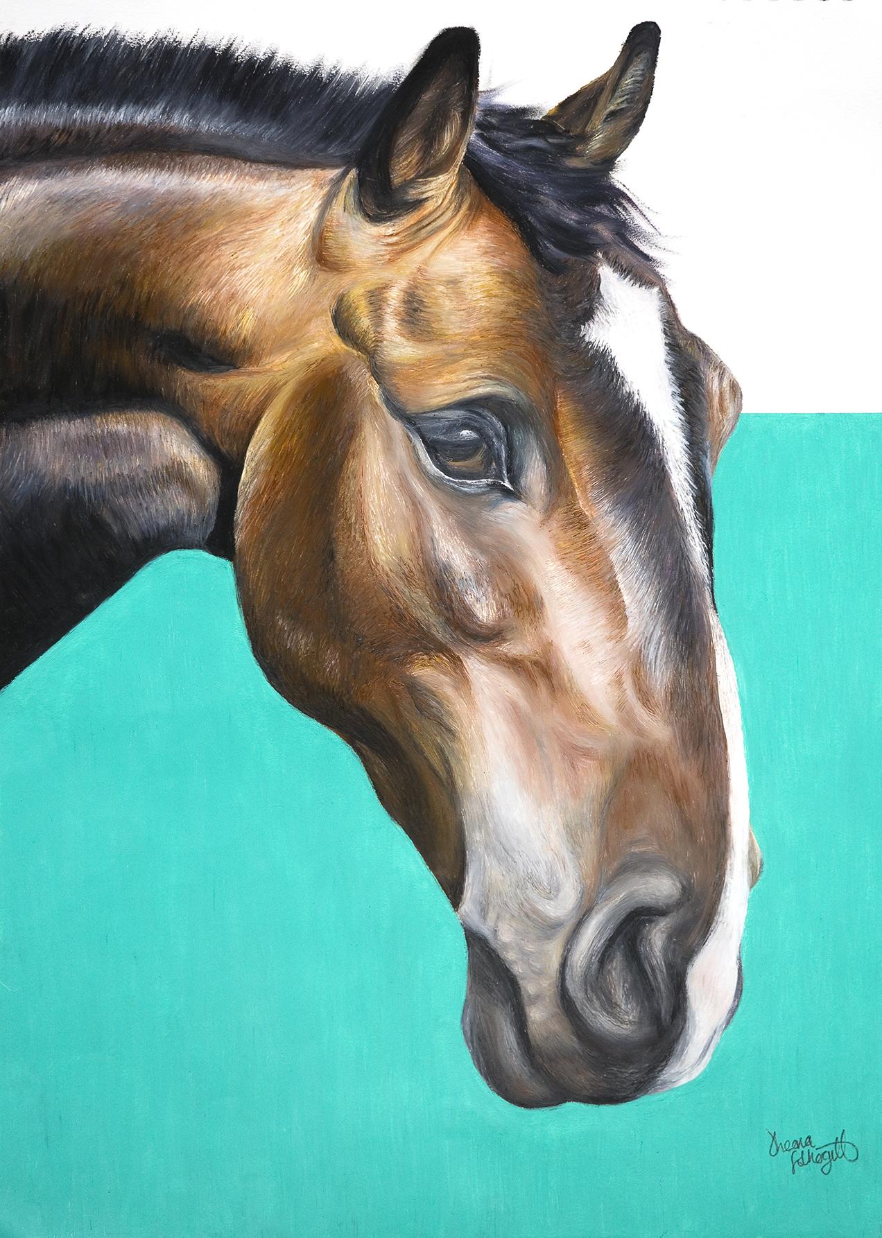 Horse Portrait Oil Pastel  Sheona Fothergill