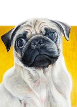 Dog Portrait Oil Pastel  - Sheona Fothergill