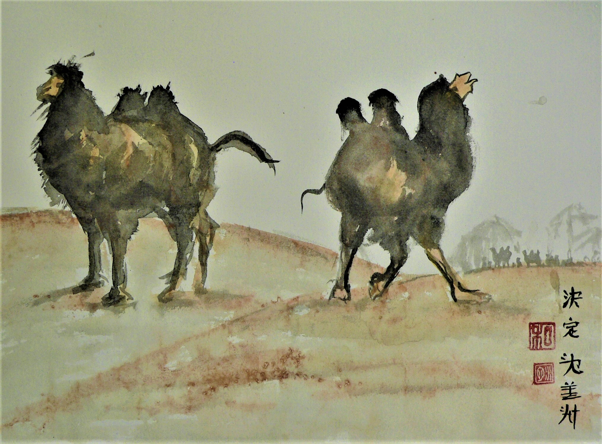 z, camels