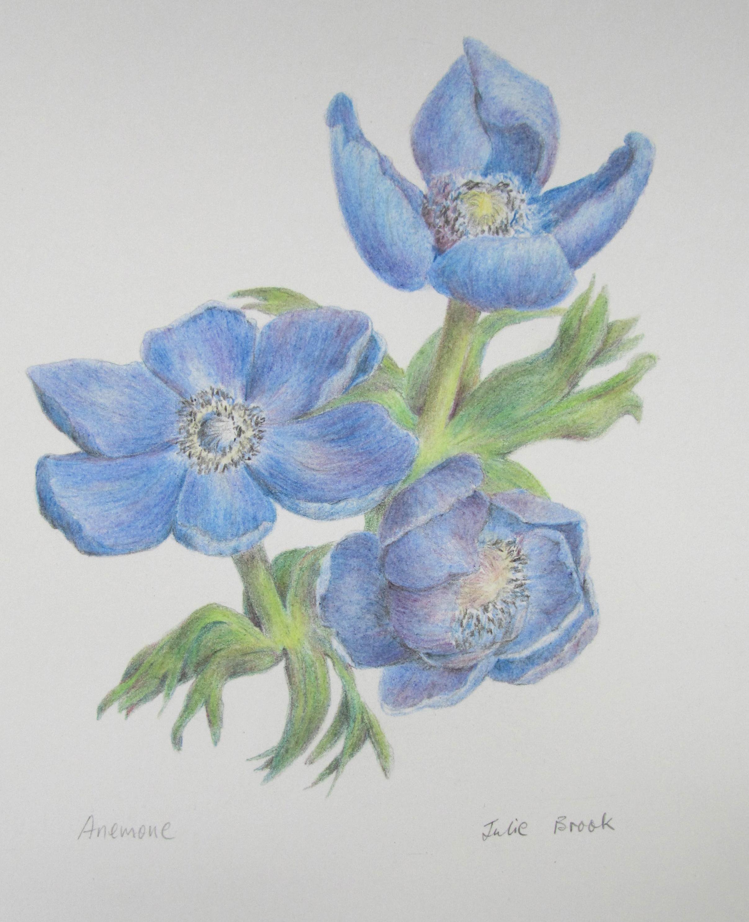 Julie Brook: Blue Anemones