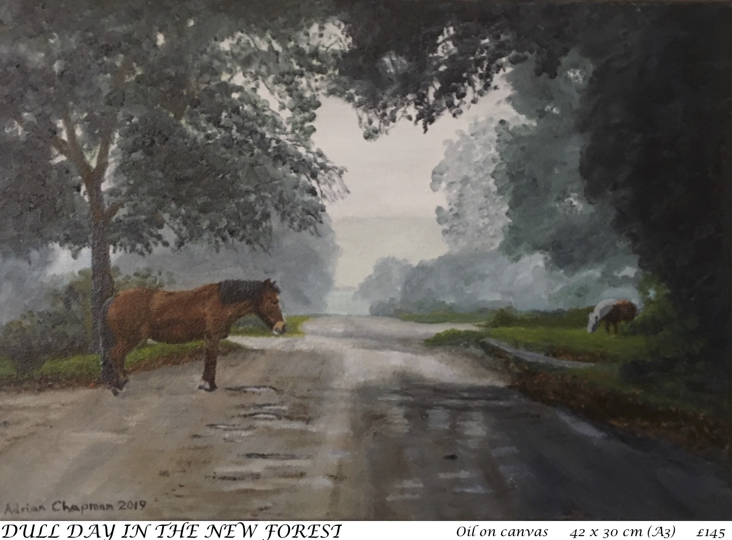 7. Dull Day in the New Forest