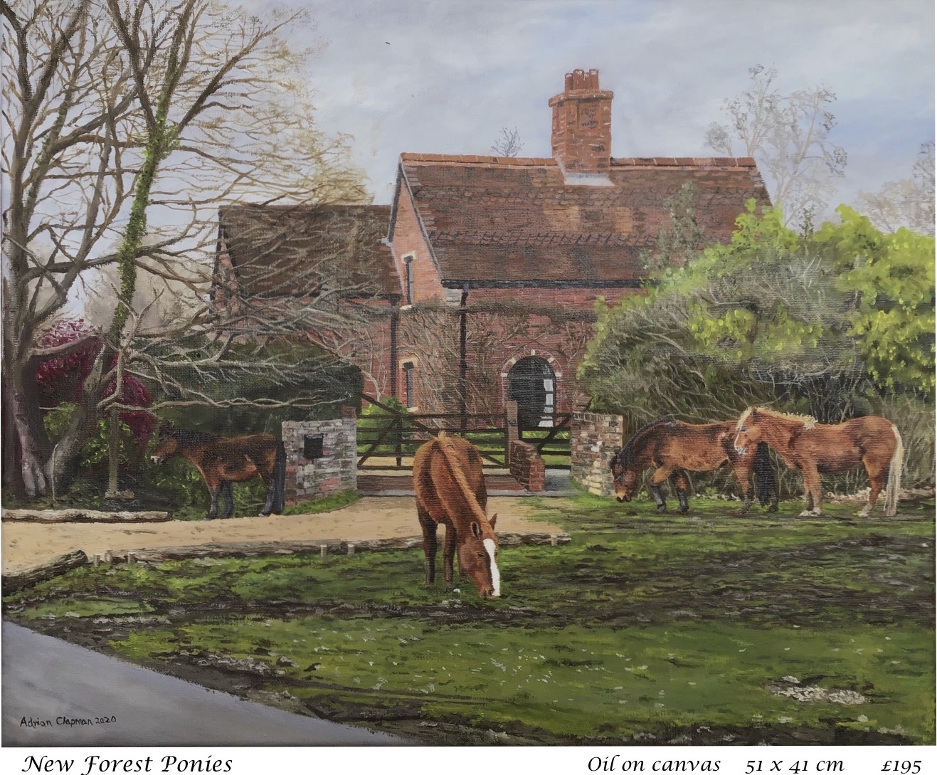 1. New Forest Ponies