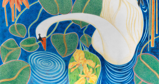 Bryan Ceney, Inquisitive Swan.jpg