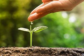 Wachstum Meditation