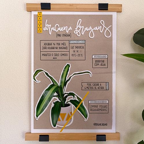 DRACAENA - poster