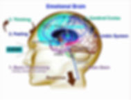 Emotional Brain- The Science of Emotion