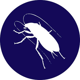 Cockroach-circle.jpg