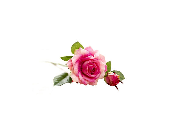 Everlasting Single Stem Rose | Pink