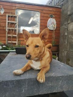 MAKA Ceramics, Studio, Dogs Oscar - Irish Pottery