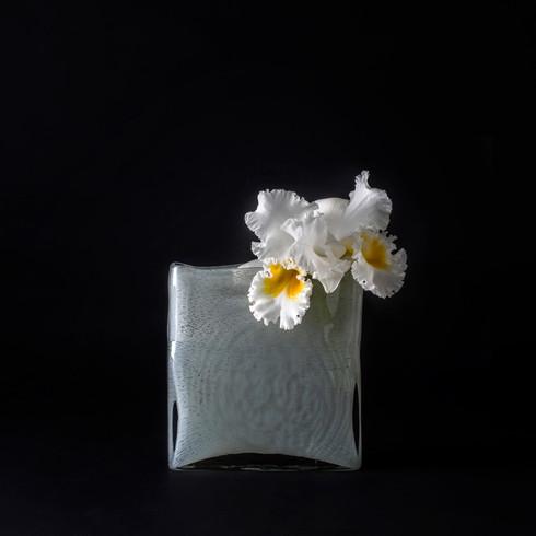 5. カトレア白+花器