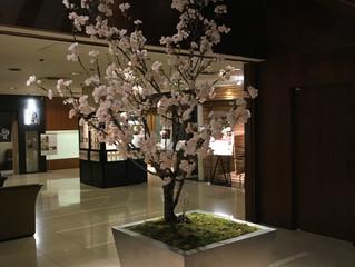 ホテルナゴヤキャッスル 桜装飾