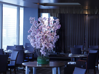 2016 Cherry blossom Display  at HOTEL NAGOYA CASTLE