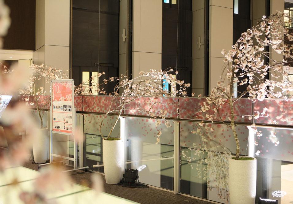 館内全館桜装飾 (アーティフィシャルフラワー)