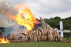 Ivory burn Nairobi
