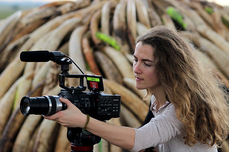 Wildlife filmmaking