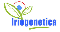 iriogenetica
