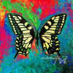 """Swallowtail Butterfly"" (enhanced)"