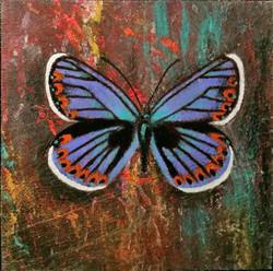 """Silver Studded Blue Butterfly"""