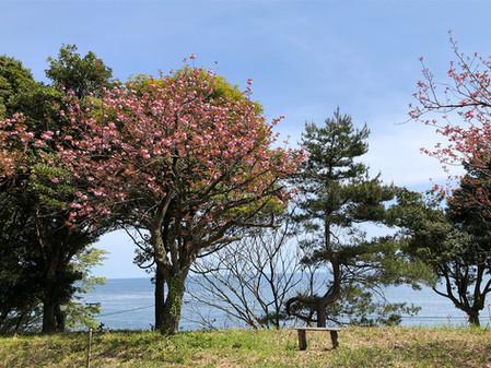 アトリエ桃花林にも春がやって来ました!