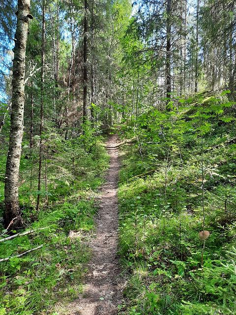 Polku metsässä