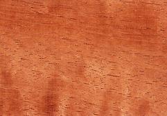 Brazilian Cedar