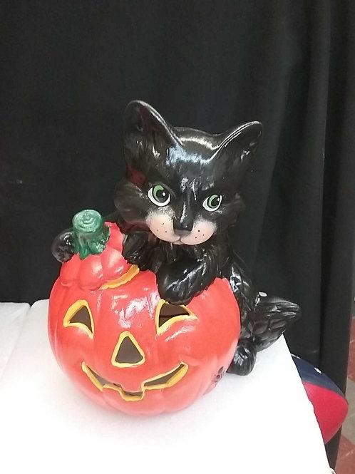 Cat sitting with pumpkin