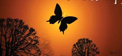 Oscari Butterfly