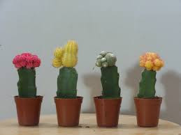 Elf's Diary Entry #15 - The Scavenger and the Cactus