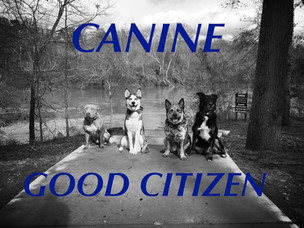 Why get Canine Good Citizen!