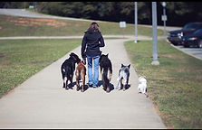 About our dog training services
