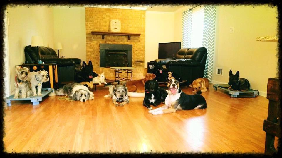Dog aggression training success