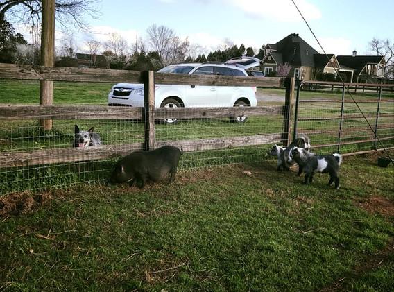 Farm in Bolingbroke, GA