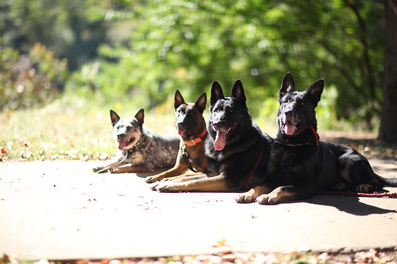 Off Leash Trained Dogs in Macon GA