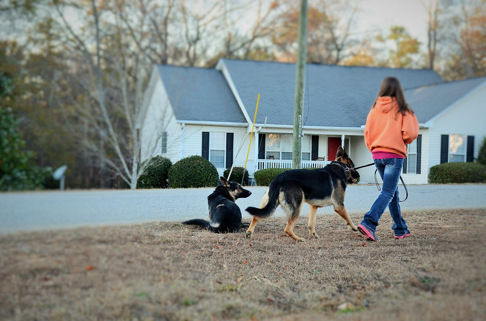 Dog behavioral issues