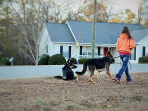 Finding the root of your dog's behavioral issues!
