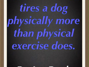 Exercise for dogs