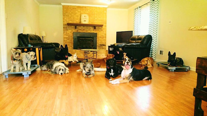 Dog Training for Adult Dogs
