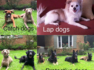 Dog breeds and their purpose