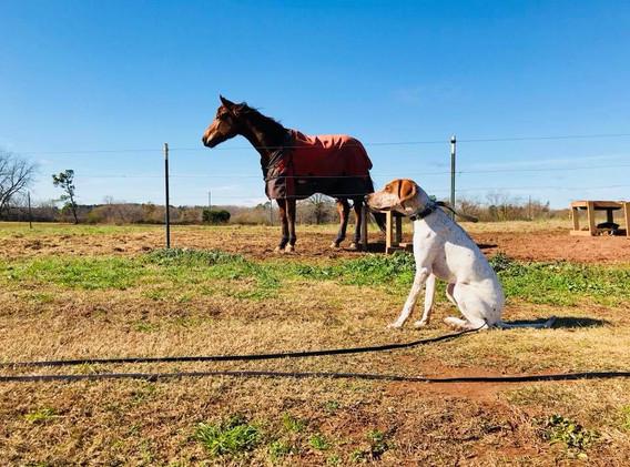 Yatesville, GA horse farm.