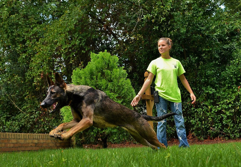 Dog training playing fetch
