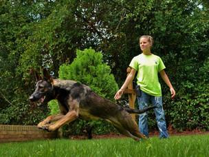 Do you reward your dog for accomplishing tasks given?