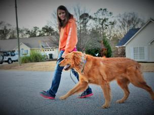 Leash Training your dog!