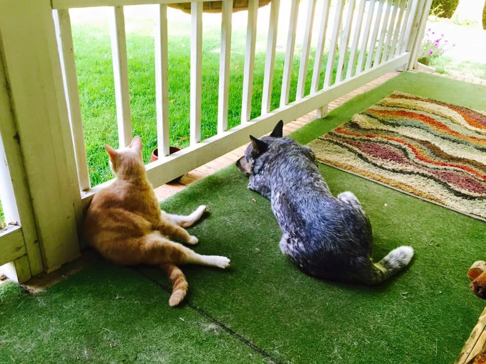 Teaching dogs