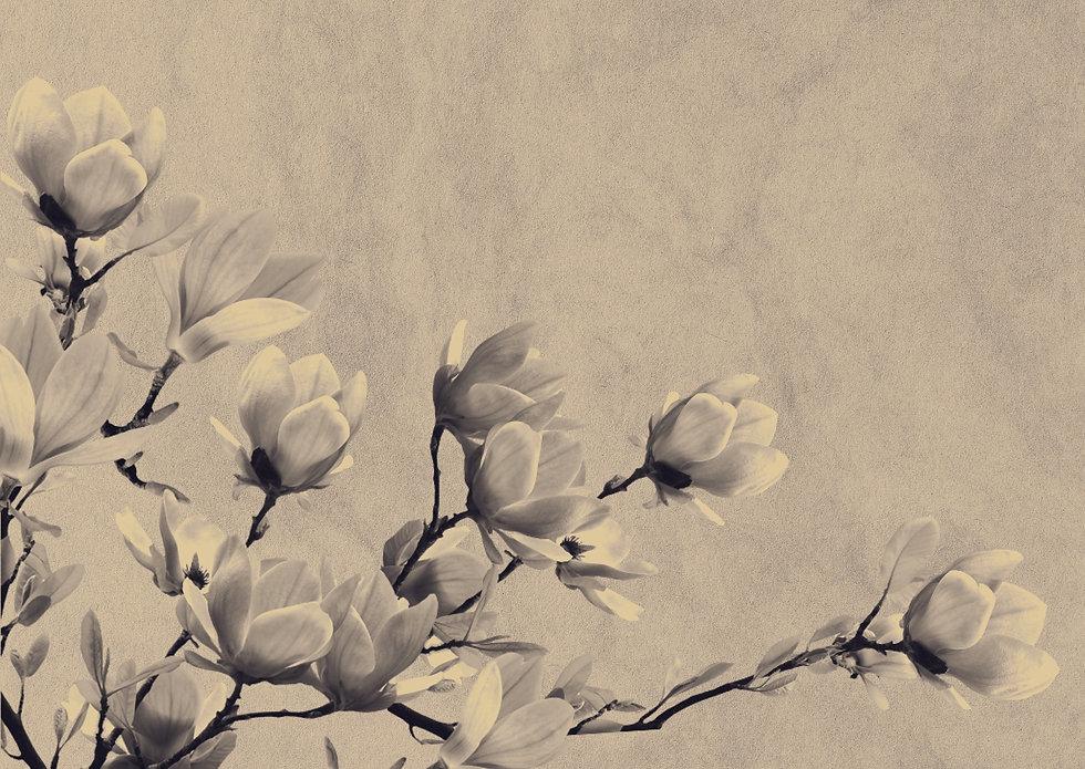 background-1425783_1920.jpg
