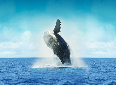 The newborn breath of the Whale.