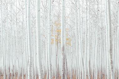 white-2565885_1920.jpg