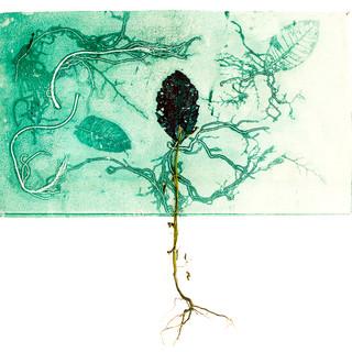 Diálogos verdes e raíz (Apó series)  2019  70x40 cm  Monotipia e raíz  Peça única