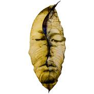 Kenesay  2018  50x25 cm  Clorofila