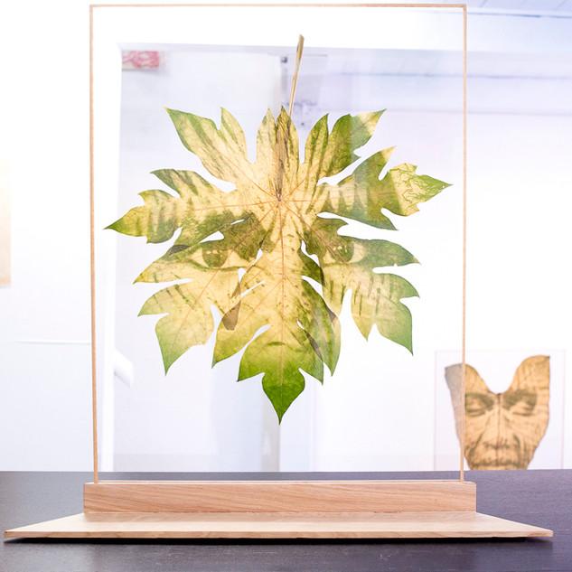 Xikuvimi Huru Yuxii  2018  68x50 cm   Impressão de clorofila, peça única.