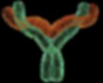 Background removed Antibody 6.3.16 600x4